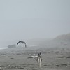 Relli chasing birds