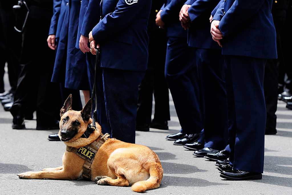 . FAIRFIELD, CA - MAY 16, A K9 officer from Travis Airforce Base sits with a formation during the 2018 Peace Officers\' Memorial Service on Wednesday in Fairfield. (Chris Riley/Times-Herald)