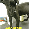 She was adopted in no time!  A little help from Heaven no doubt!