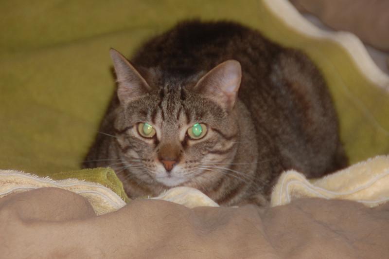 Lovely kittie.