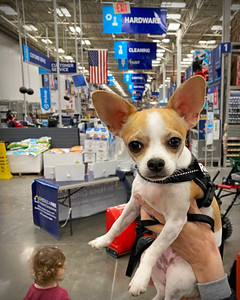 First trip to Lowe's