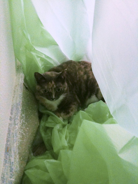 Our cat Biner has found a good resting spot in the plastic.