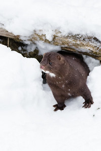 2016 Kroschel Wildlife Center, Haines, Alaska