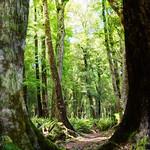 Rotoroa Forest