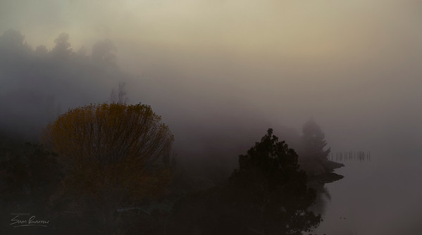 Sandy Bay Fog