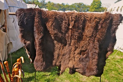 306 Wooden Hauk Taxidermy Co. Tanned Bison Hide