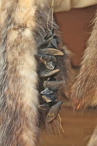 White-tailed Deer hooves hanging between an opossum and raccoon hide, at the Pioneer Days festival in Fowler Park, near Terre Haute, IN.