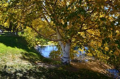 Beside Caughlin Ranch Drive - October 25, 2015