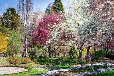 Spring in Rancho San Rafael Park