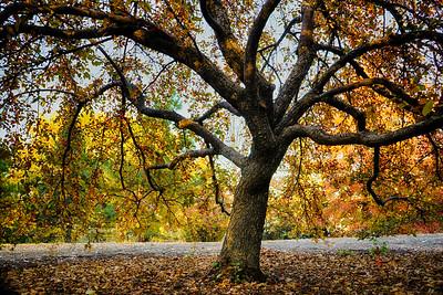 My Favorite Tree 6362