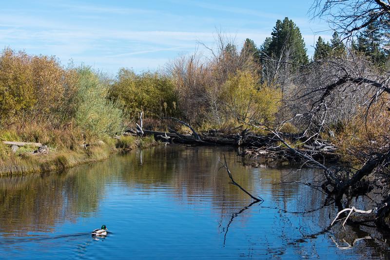 Taylor Creek.