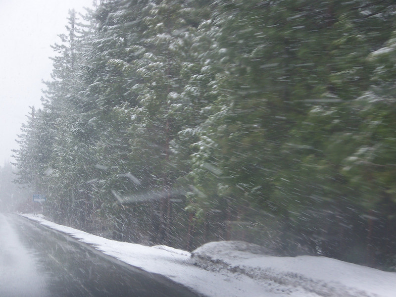 Now it's actually snowing on us!<br /> [On the road to Reno, in Northern California]