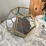 Gold Framed Geometric Terrariums 6 x 4