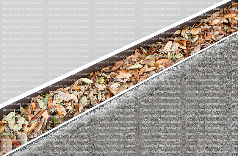 Dirty gutters clogged with oak leaves.