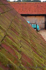 English Moss on Clay Tiles