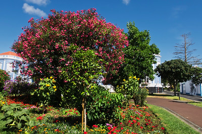 Ponta Delgada 1