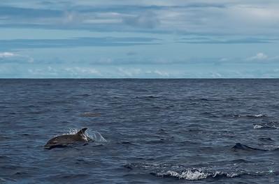 Delfini 5
