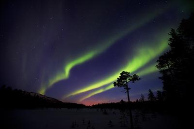 Aurora 6