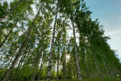 Birch 1, Finland