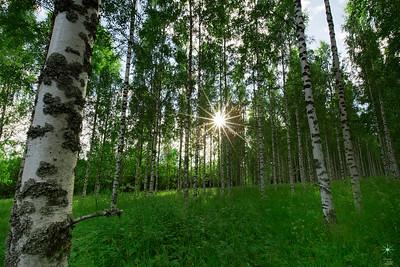 Birch 2, Finland