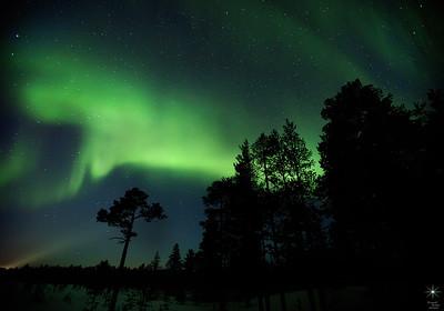 Aurora 18