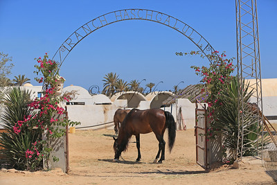 Reiturlaub auf Djerba/Tunesien