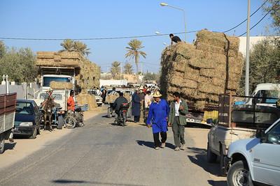 Reiturlaub auf Djerba/Tunesien Pferdemarkt in Midun.