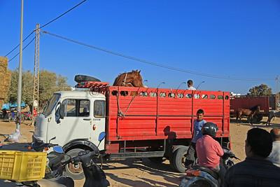 Reiturlaub auf Djerba/Tunesien Pferdemarkt in Midun - Pferdetransporter