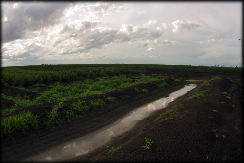 Irrigated cotton fields