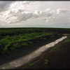Irrigated cotton fields