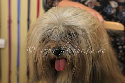 Hundefriseur0014