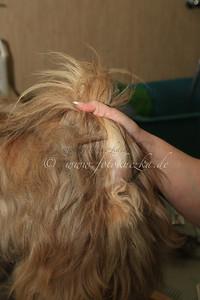 Hundefriseur0033