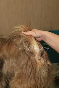 Hundefriseur0034