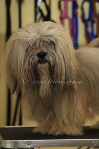 Hundefriseur0015