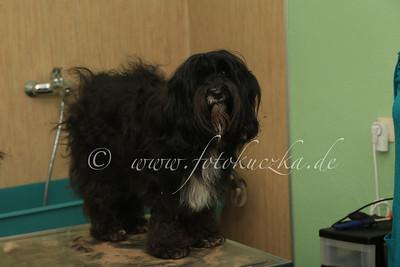 Hundefriseur0043
