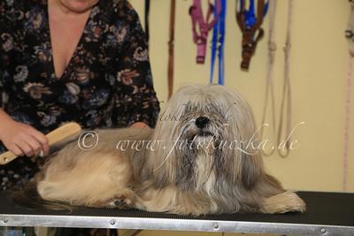 Hundefriseur0013