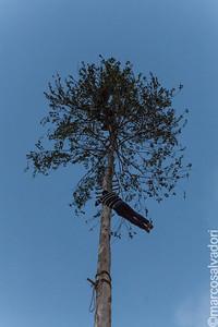 Giovani coraggiosi si cimentano nell'ardua scalata dell'albero da cui salutano, con spericolate acrobazie, la folla ammutolita