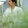 Postdoc-Studentin Nargis Parvin im Gewächshaus mit Arabidopsis-Pflanzen, Zentrum für Molekularbiologie der Pflanzen (ZMBP), Universität Tübingen, Deutschland