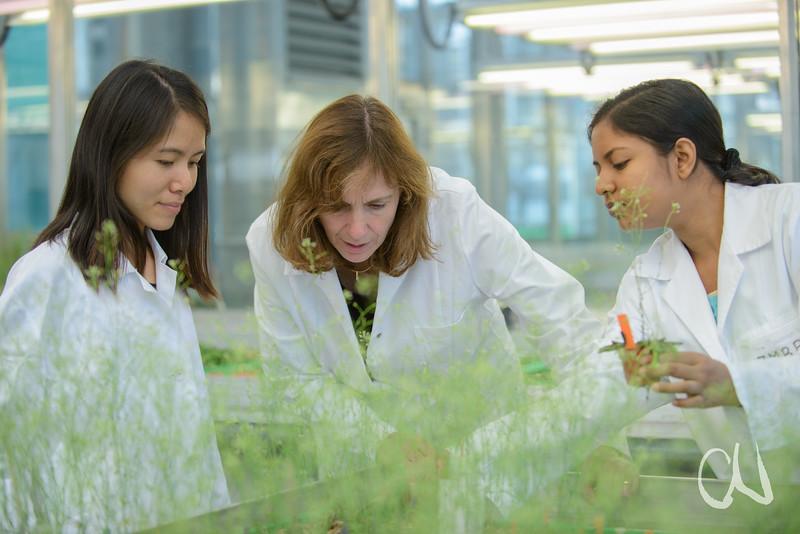 Pflanzengenetikerin Marja Timmermans mit den Postdoc-Studentinnen Khoa Nguyen und Nargis Parvin im Gewächshaus mit Arabidopsis-Pflanzen, Zentrum für Molekularbiologie der Pflanzen (ZMBP), Universität Tübingen, Deutschland