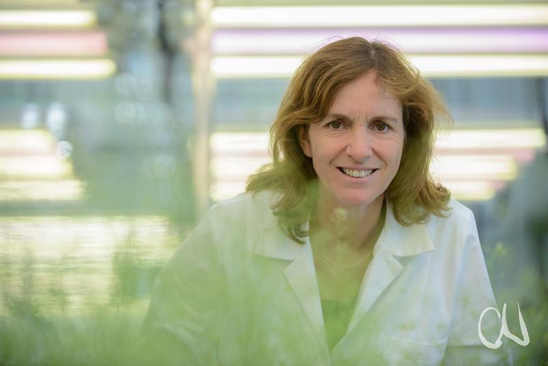 Pflanzengenetikerin Marja Timmermans, Gewächshaus mit Arabidopsis-Pflanzen, Schaumkresse, Zentrum für Molekularbiologie der Pflanzen (ZMBP), Universität Tübingen, Deutschland