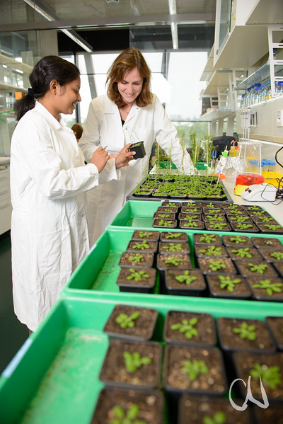 Pflanzengenetikerin Marja Timmermans im Gespräch mit ihrer Mitarbeiterin Nargis Parvin, Labor mit Arabidopsis-Pflanzen (Schaumkresse), Zentrum für Molekularbiologie der Pflanzen (ZMBP), Universität Tübingen, Deutschland