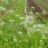Salat- und Gemüsefeld, Domäne Fredeburg, Biohof, Demeter, WWF Ostseelandwirt des Jahres, Ostseepreis 2014, Fredeburg, Schleswig-Holstein, Deutschland