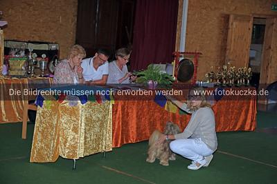 Zuchtschau Socke 25 08 20180010