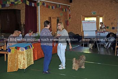 Zuchtschau Socke 25 08 20180012
