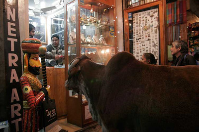 Cow looking inside a jewellery shop, New Delhi