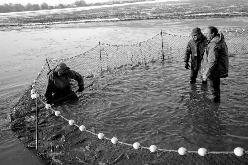 Photographe professionnel de reportages à Lyon, Rhône-Alpes,  France. Reportages, portraits, vidéo. Photographies noir et blanc d'une pêche d'étang dans la Dombes, Ain.