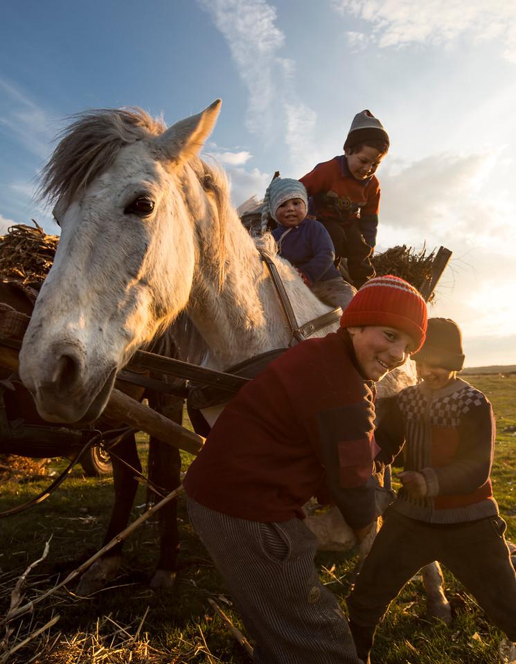--- JE SUIS ROM ---<br /> PHOTO OLIVIER PONTBRIAND LA PRESSE. Dans cette photo: Des enfants s'amusent avec un des chevaux du clan. Photo prise lors de la rencontre  d'un clan de gitans nomades, parmi les derniers de la Roumanie, se préparant à faire le souper après avoir été vendre des pièces de métal ramassées sur leur chemin. Reportage sur la vie et les réalités des Roms, gitans,  en Roumanie.  -30- Catégorie : Photo reportage. 23 Avril 2013