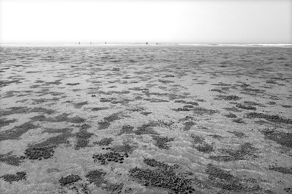 Crabs land