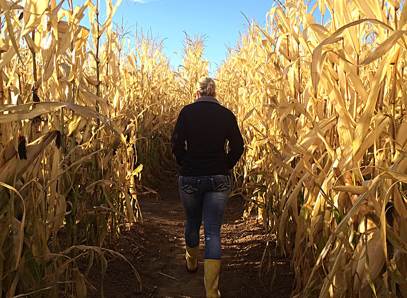 Jenna Pipher walks through the Jack Lantern Northern Colorado Corn Maze, which she manages, on Tuesday, Sept. 30, 2014. (Photo by Jessica Benes)