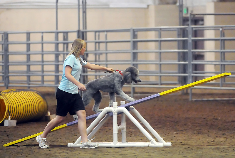 Loveland resident Ashley Gunckel, 14, competes in the 4-H dog agility contest with her dog, Grace, during the Larimer County Fair on Friday at The Ranch.
